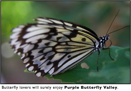 purple butterfly valley maolin taiwan