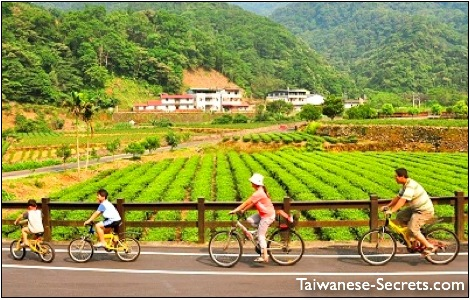 pinglin travel in taiwan