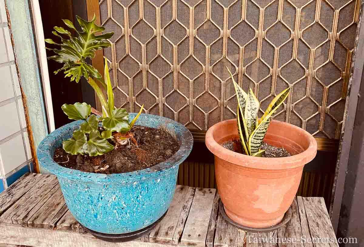 wild east plants